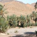 desert 033
