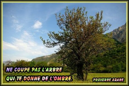 proverbearabe_arbreombre