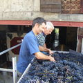 02. Vendanges Sep 2009