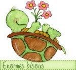 _norme_bisous_tortue