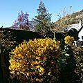 Mon jardin au printemps!