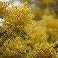 Tous en fleur et en odeur
