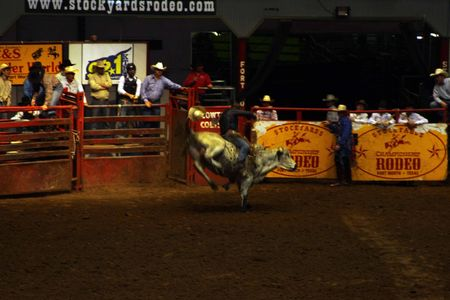 Rodeo_8