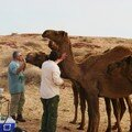 hangry camels
