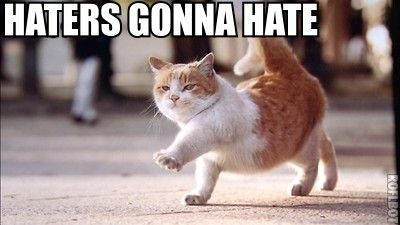 haters_gonna_hate_cat