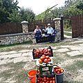 roumanie - nos maraichers vendeur de tomates