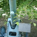 Mortier de tranchée fabry 150mm mle 1917 à bucarest