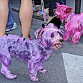 Pink doggies