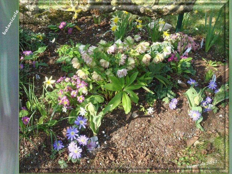 balanicole_2017_03_le printemps des vivaces_11_blanda3