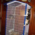 2008 05 30 Le chaton qui grimpe à la cage du chinchilla