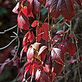 lumière d'automne 4