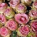 Color match #04 : rose vs abricot
