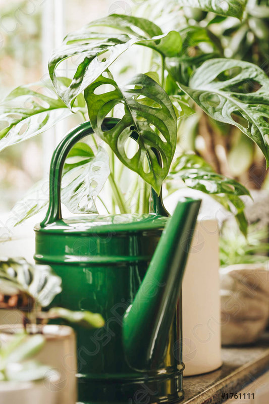 potted-green-plants-on-window-1761111
