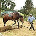 équitation de pleine nature - rallye équestre (99)