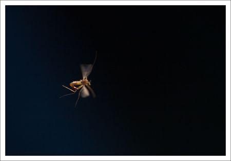 QM_insecte_vol_2_150310