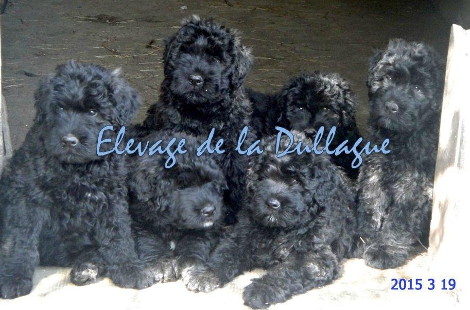 Lucy,Leon,Loustic,Like,Looping,Lucky tous...de la DULLAGUE