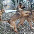 2009 03 11 Kapy qui joue avec sa mère Cacahuète et sont père derrière