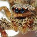 Les araignées et leurs toiles