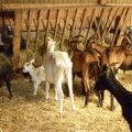 ferme BARADOZIC 076