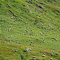 Montagne de Couecq, estives 1 (64)