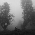 forêt6