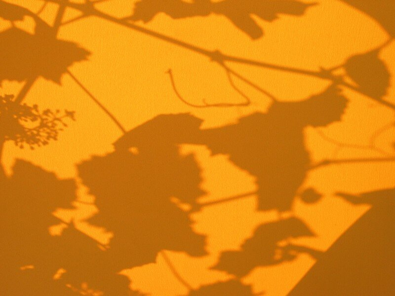 Ombre végétale sur parasol de jardin
