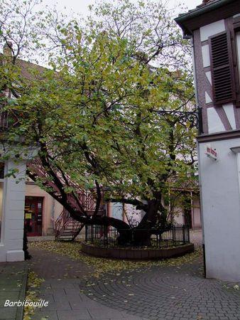 arbre11_Nov10_035