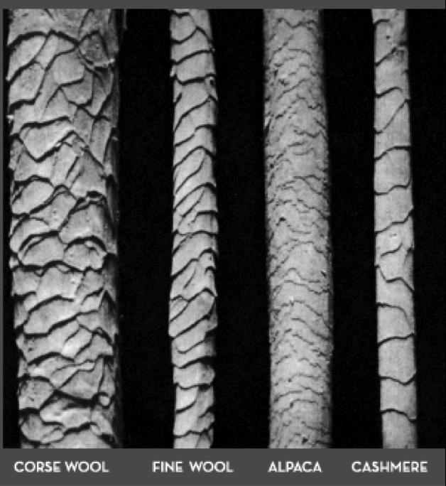 ecailles fibre