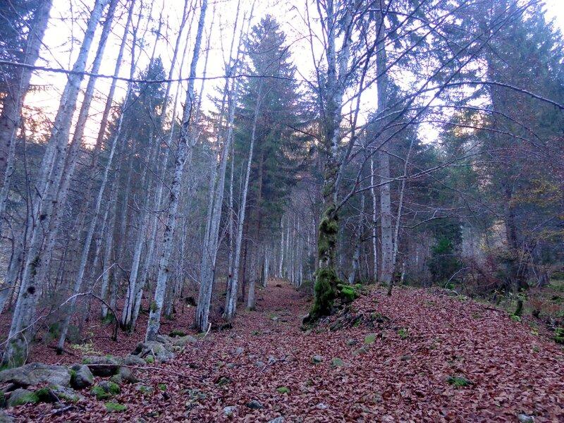 la forêt pour rejoindre le lac des plagnes
