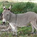 2008 10 15 L'âne