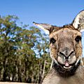 Kangaroo Island - Photos prises par Fred.