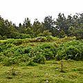 cabane de berger (ruines), Plateau du Cournau