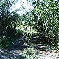 Végétation méditerranéenne Cannes Chemin bord rivière Arc Berre l Etang