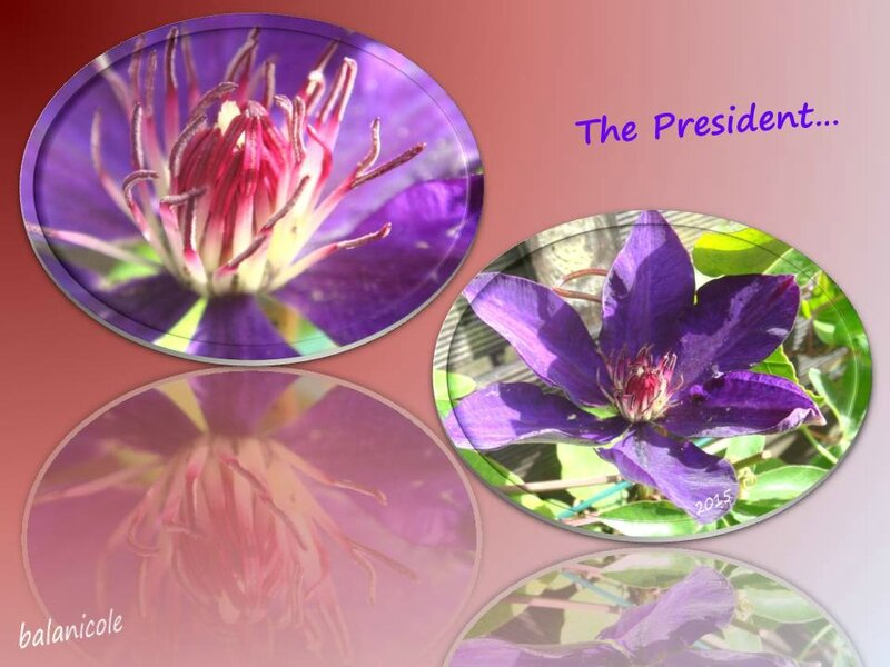 balanicole_2015_6_juillet_10_the president5
