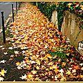 Trottoir tapissé de feuilles mortes