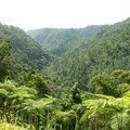 Foret tropicale Martinique