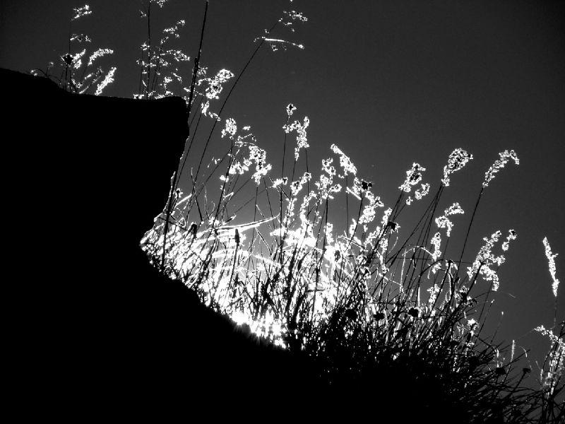 Ombre parmi les ombres