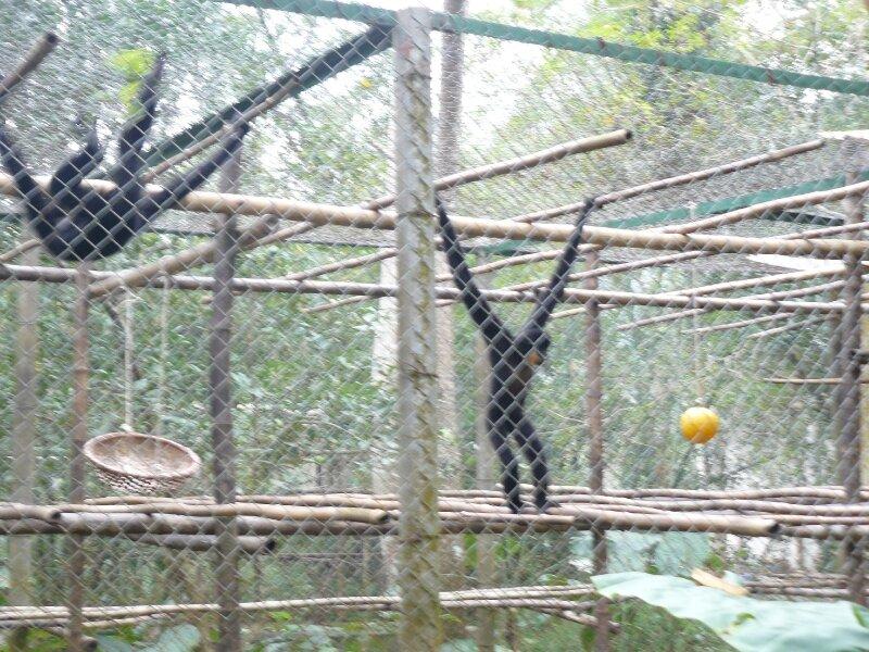 2010-11-18 parc Cuc Phuong x (2)