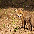 2014-05-30 LUX-1107