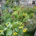 2009 09 02 Une partie de mon jardin