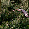 rapaces beauval13