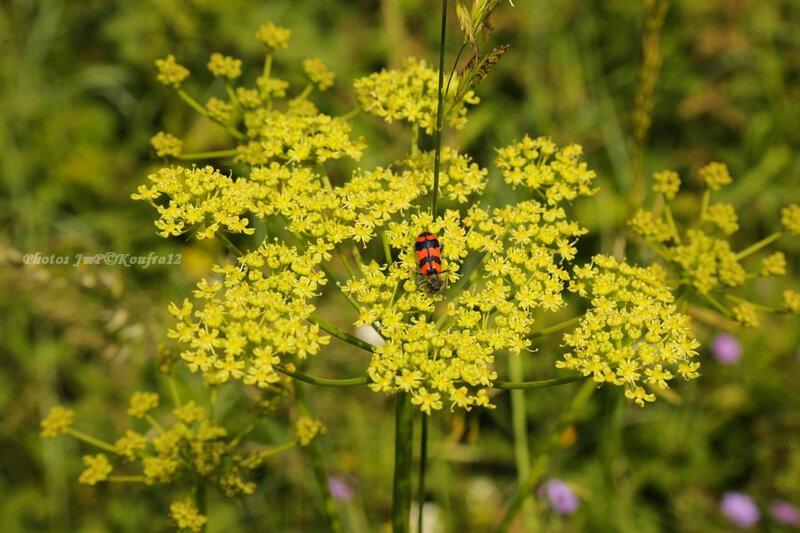 Photos JMP©Koufra 12 - Le Mas Fleurs - 09062018 - 119
