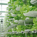 Les fermes verticales, une solution contre l'extinction des espèces ? - vertical farms, against the extinction of species ?