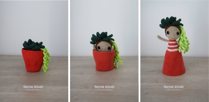 flora_succulente