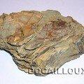 OSTREA BELLOVACENSIS 1 76.Criel-Plage