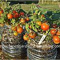 Comment récupérer les graines de tomates ? (vidéo)