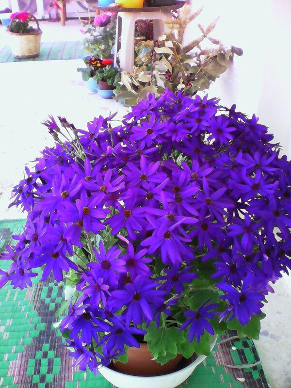 fleurs de fevrier