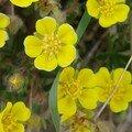 2008 04 16 Un macro sur de magnifique fleurs jaunes
