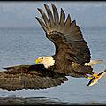 Freedom - l'envol d'un aigle !...