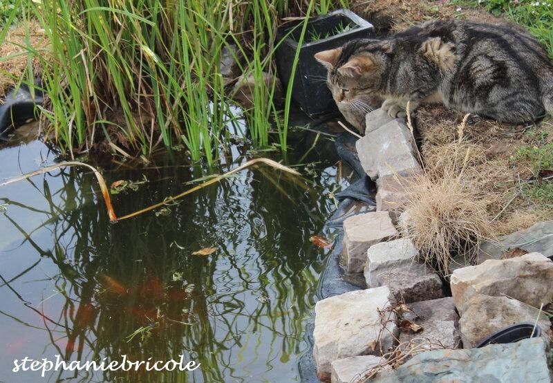 bassin poisson sana